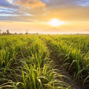 Energia e o certificado de biodiversidade